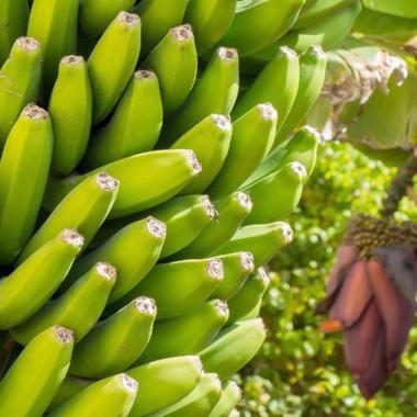 Экскурсия на банановую ферму из Киева