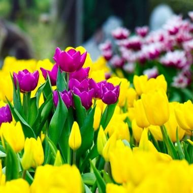 Экскурсия в Харьков на парад тюльпанов из Днепра