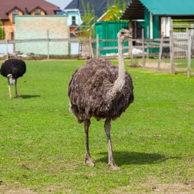 Экскурсия на страусиную ферму из Харькова для школьников