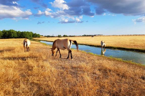 Картинка животные в заповеднике Аскания-Нова