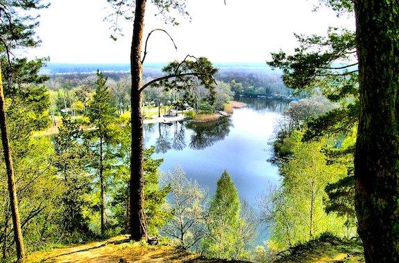 Фото Гомольшанские леса
