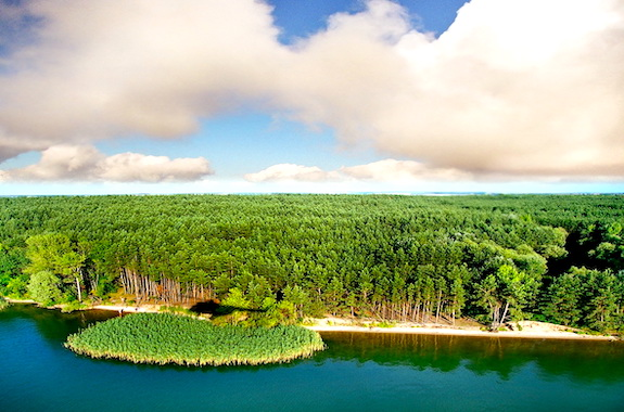 Картинка экскурсия в Гомольшанские леса