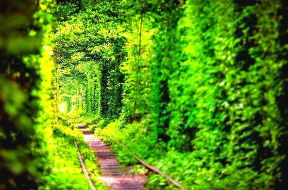 Фото экскурсия в тоннель любви