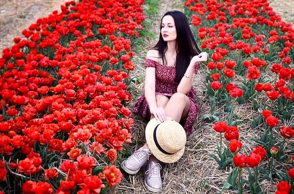 Картинка поездка на поле с тюльпанами