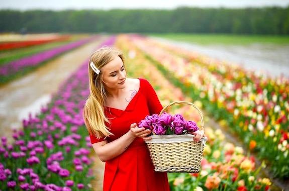 Фото поле с тюльпанами на Волыне