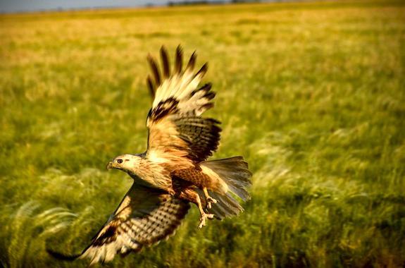 Картинка птица в заповеднике аскания нова