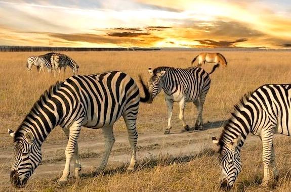 Картинка животные в Аскании-Новой
