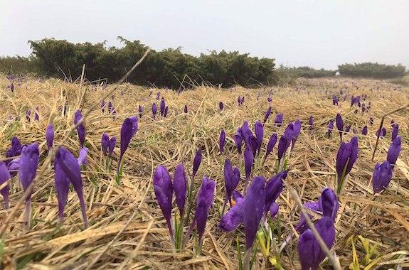 Фото Карпаты весной