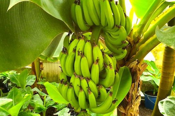 Фото поездка в банановую ферму
