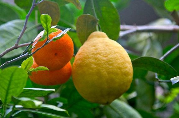 Фото выращивание тропических фруктов в Киеве поездка