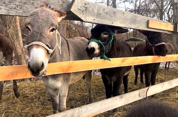 Картинка поездка на ферму осликов