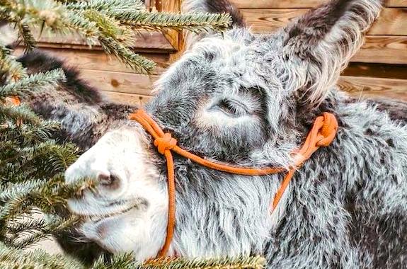 Фото экскурсия на ферму ослов