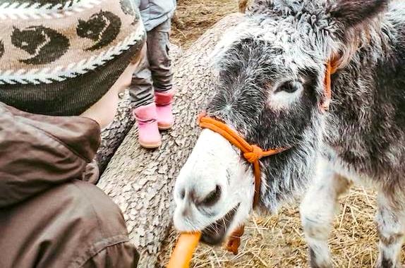 Фото поездка на ферму ослов