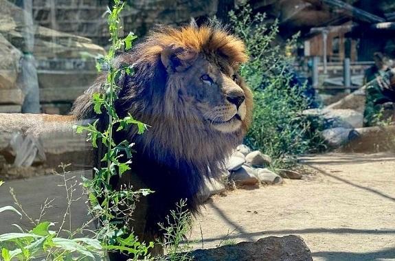 Картинка поездка в зоопарк