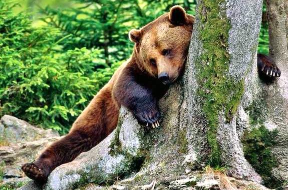 Фото поездка в центр реабилитации бурых медведей